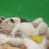Teddy bear, More Cuddles